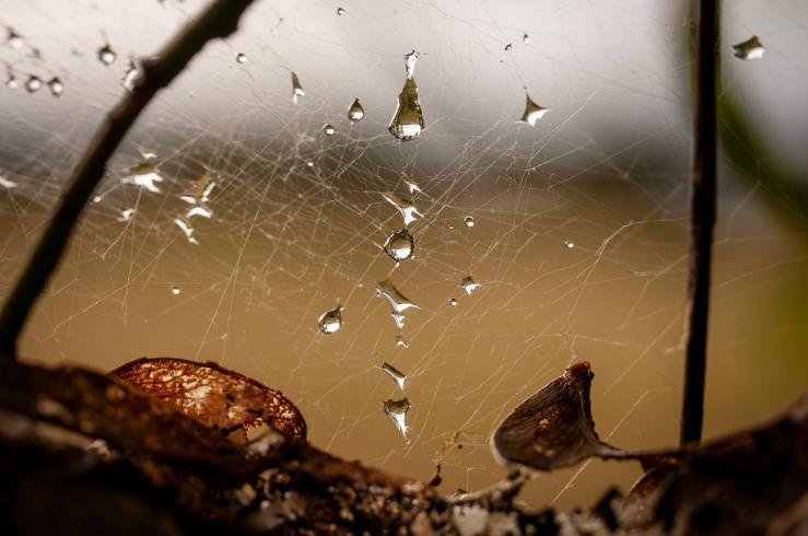 Spiderweb, (c) Ian Ferguson