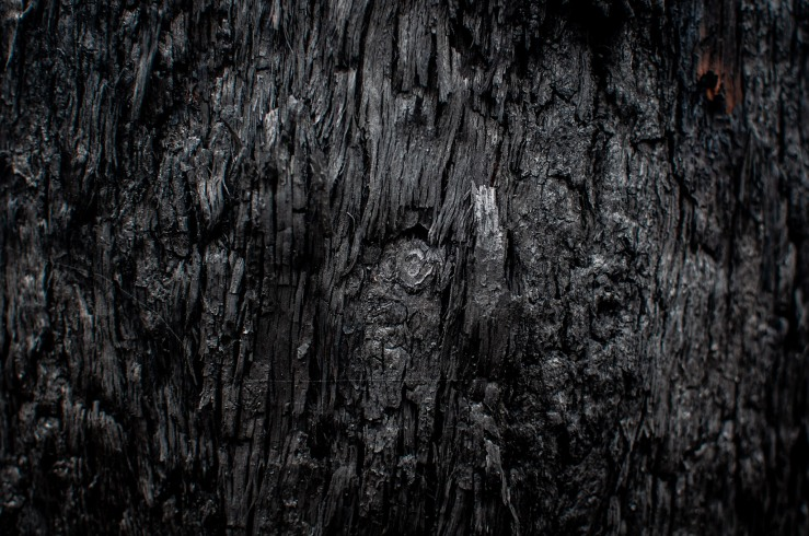 Burnt Tree, (c) Ian Ferguson