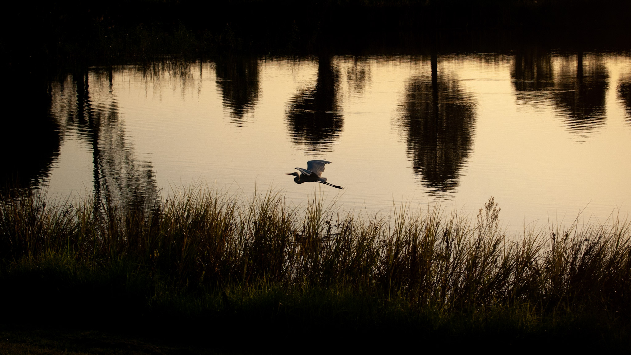 Bird over lake, (c) Ian Ferguson